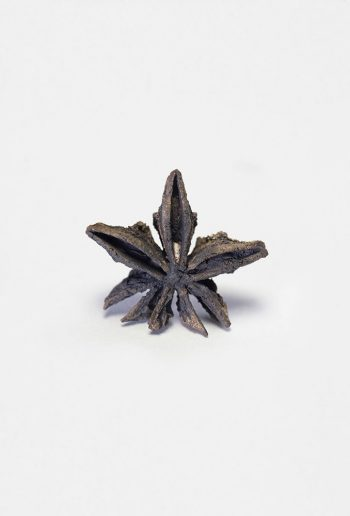 Pin Anise